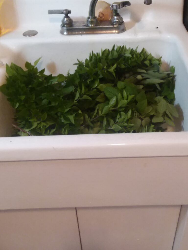 A sinkful of herbs