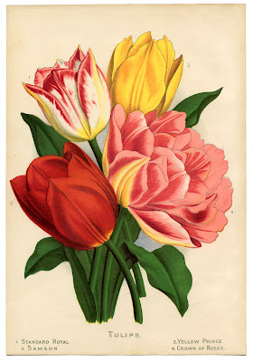 Painted tulips of different colors from 1870s garden book